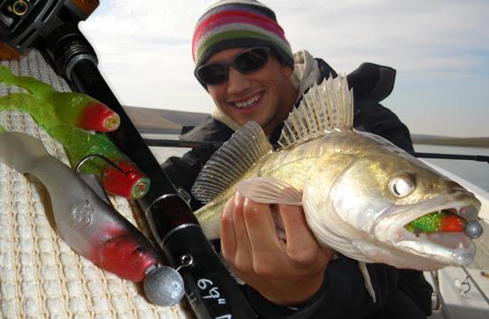 Top 10 Zander / Walleye Soft Baits   Fishinglifestyle net
